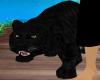 tiger black animated