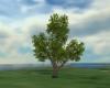 ANIMATED TREE#2