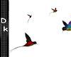 *Dk* Love bird
