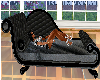 Black Couch with Poses
