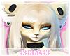 Fennec Fox Furry