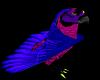 Parrot pet