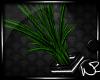 Lover's Loft Plant