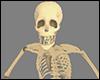 Thriller Skeleton