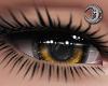 Honey Queen Eyes