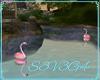 Flamingos Anim