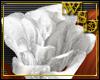2 White Hair Roses