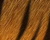 wild tiger hair