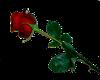~Real Rose~