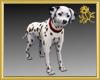 Pet Dog Lucky