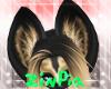 African Dog Ear V2