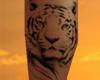 White Tiger Calf Tattoo
