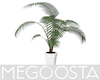 Minimal Modern Palm