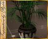 I~Celtic Palm Plant