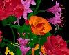 LW - My last roses 2
