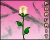 (*Par*) Lt. Orange Rose