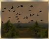 Country~FlyingBlackBirds