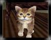 [RMQ]Adopt Kitte