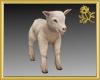 Lamb Pet