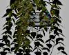 Modern Ivy Plant/Stand