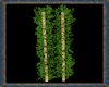 ⚡ Ivy Poles