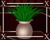 .X. Cozy Plant