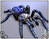 c.lividus tarantula
