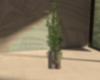 booty Vase