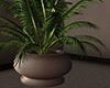 Motel Palm Plant