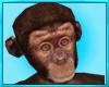Cute Pet Monkey