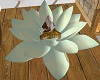 SOFT WHITE LOTUS