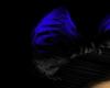 black&blue ears