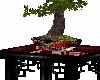 Sweet Asian Bonsai Table