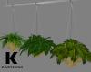 Oia Hanging Planter