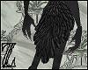 Harpy tail (Celaeno)