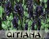 Black Rose Bushes V2