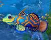 Mermaid Fish *Animated