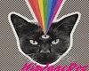 Black Cat NvrShoutNvr
