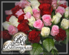 Pink Red White Roses