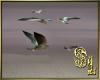 *Animated Gull/Goelands