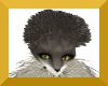 anyskin hedgehog head