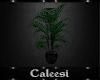 Dark Solace Plant 1