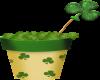 St.Patricks Irish Pot