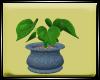 Dp Pot Plant