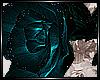 + Aqua Rose +
