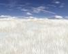 SIN White Grass