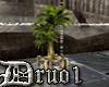 Royal Plant [D]