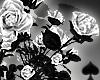 Cat~ White Roses Bush