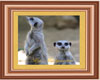 Meerkat framed picture