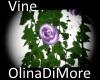 (od) Vine, purple